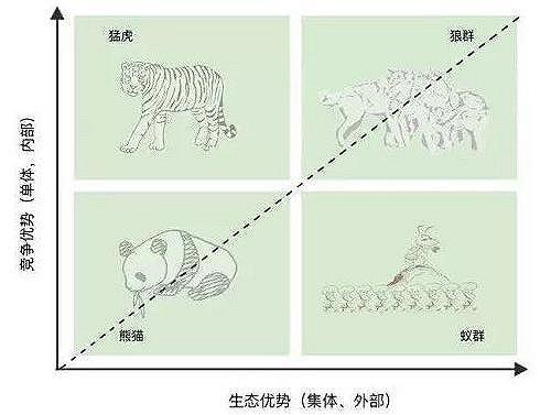 熊猫、猛虎、蚁群、狼群,看看你的企业是哪类