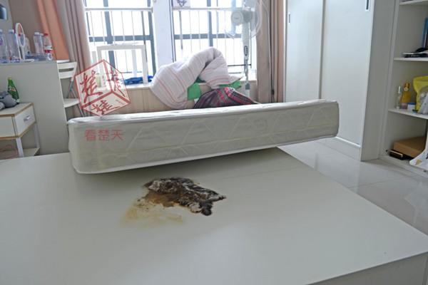 女子租住公寓床垫下发现死猫 已被压成一张纸片