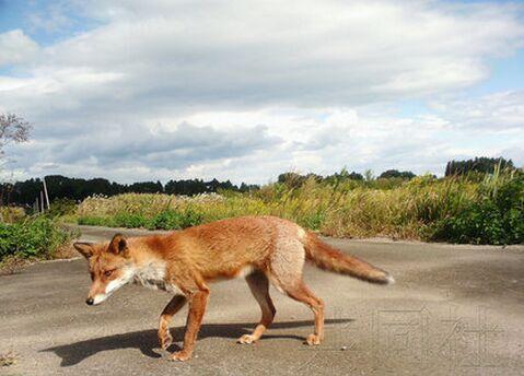 调查了野猪,浣熊,狸子和果子狸等动物的出现频率.