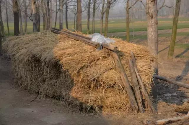 农村大奶草垛性爱_农村的标志之一(稻草垛),将会消失在大家的视野.